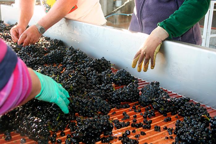 produção dos vinhos