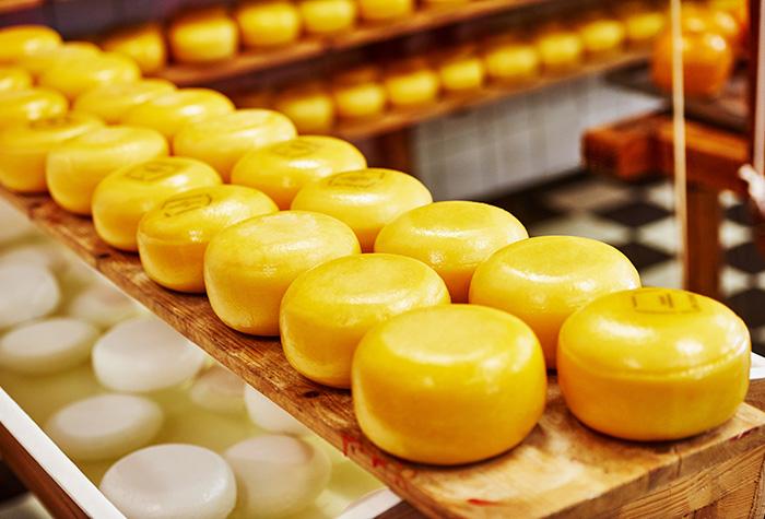 queijos industrializados