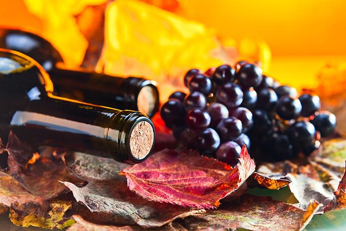 vinhos para outono
